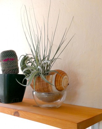 airplants2